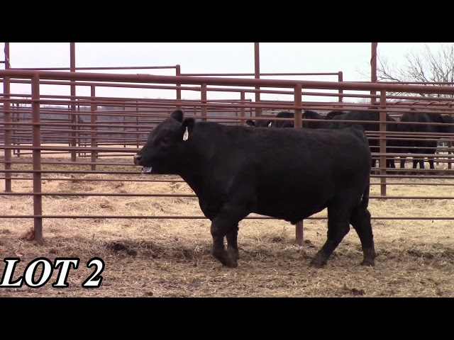 Mead Angus Farms Lot 2