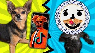 Best Dog Viral Tik Tok Wins $10,000 Challenge! PawZam Dogs