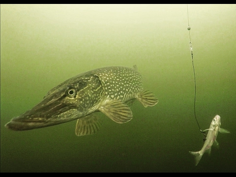 Tip Up Fishing Icy Winter Pike