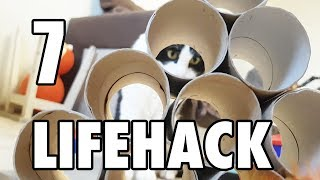 7 LifeHacks with Toilet Paper Rolls for a cat
