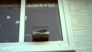 Window Bird Feeder - Single Finch