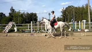 Продаётся терский жеребец из ПЗ Серая лошадь, под детей или любителей