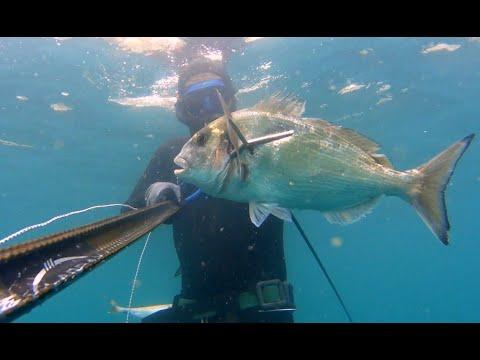 Ρηχό ψαροντουφεκο – Τσιπούρες Spearfishing Sparus Aurata Shallow Ambush