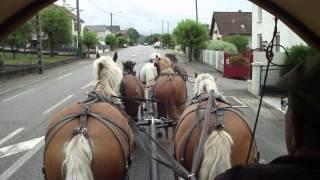 vidéo attelage à 6 chevaux