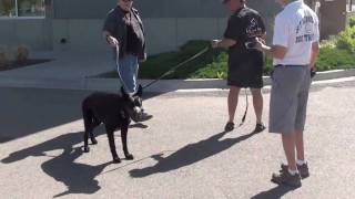 Dog Training - Aggression German Shepherd (part 1)