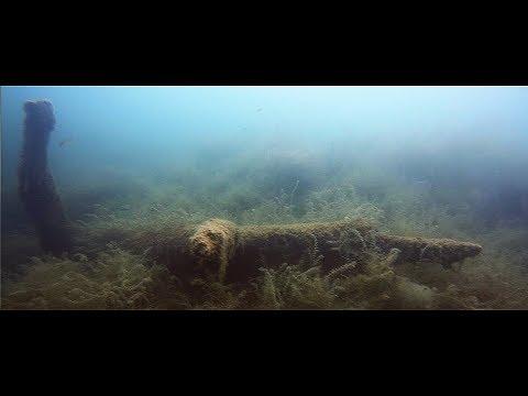 #11 Tauchgang im Unterwasser-Dschungel 23.07.2017
