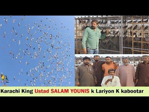 Karachi King Ustad Salam Younis K Lariyon K Kabootar - Pigeons LOFT