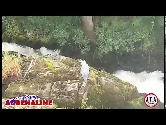 Heron at the Slitrig Water in Hawick - Short wildlife nature clip by JTAPromos www.JTAPromos.net