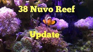 38 gallon nuvo reef update