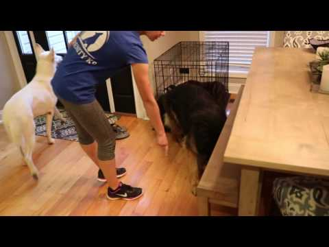 How to use Body Language and Energy to Communicate with your Dogs pt 1