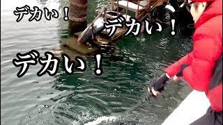 マスゲンが操る巨大ルアー「尺ONE」に・・ thumbnail