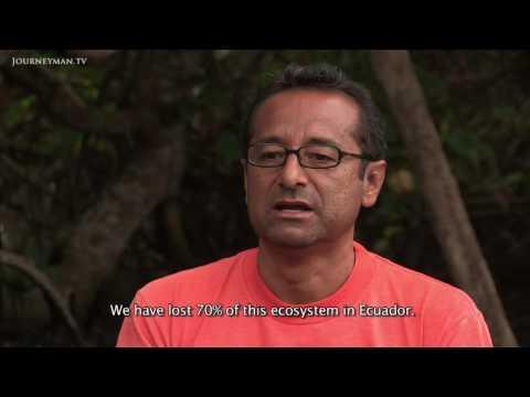 How Shrimping Has Destroyed Ecuador's Ecosystem (2014)