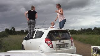Kruger Park Tourists Out Of Car At Lion Sighting