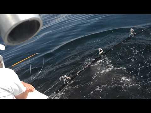 Nj shark fishing on the all in 8 16 2013 off asbury park for Shark fishing nj