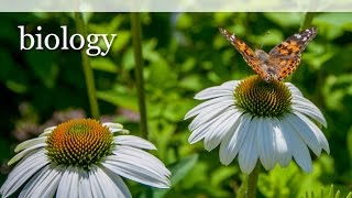 Biology 101-  Everything you need to know. PART 1