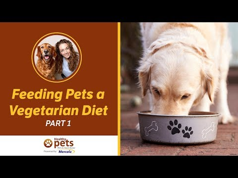Dr. Becker on Feeding Pets a Vegan or Vegetarian Diet