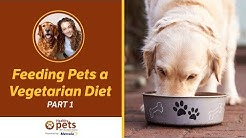 Dr. Becker on Feeding Pets a Vegan or Vegetarian Diet