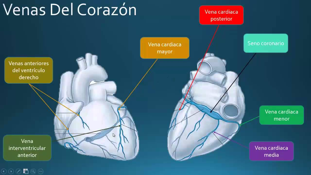 Irrigacion del corazon - YouTube