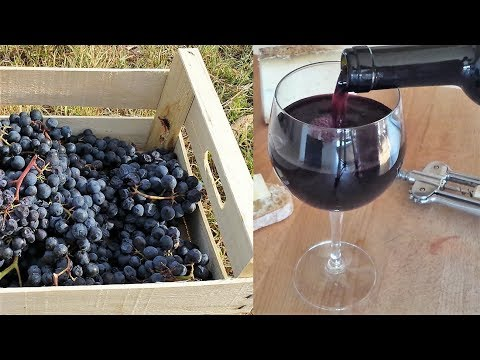 Homemade Italian Wine - How to make wine at home from grapes
