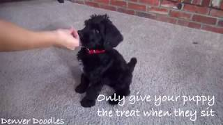 How to teach your puppy sit