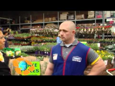 tg 21 lowes trees - Lowes Live Christmas Trees