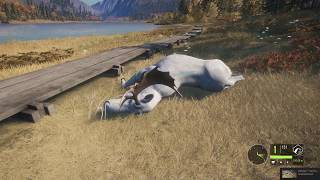 theHunter  Call of the Wild - Gold albino moose bull!