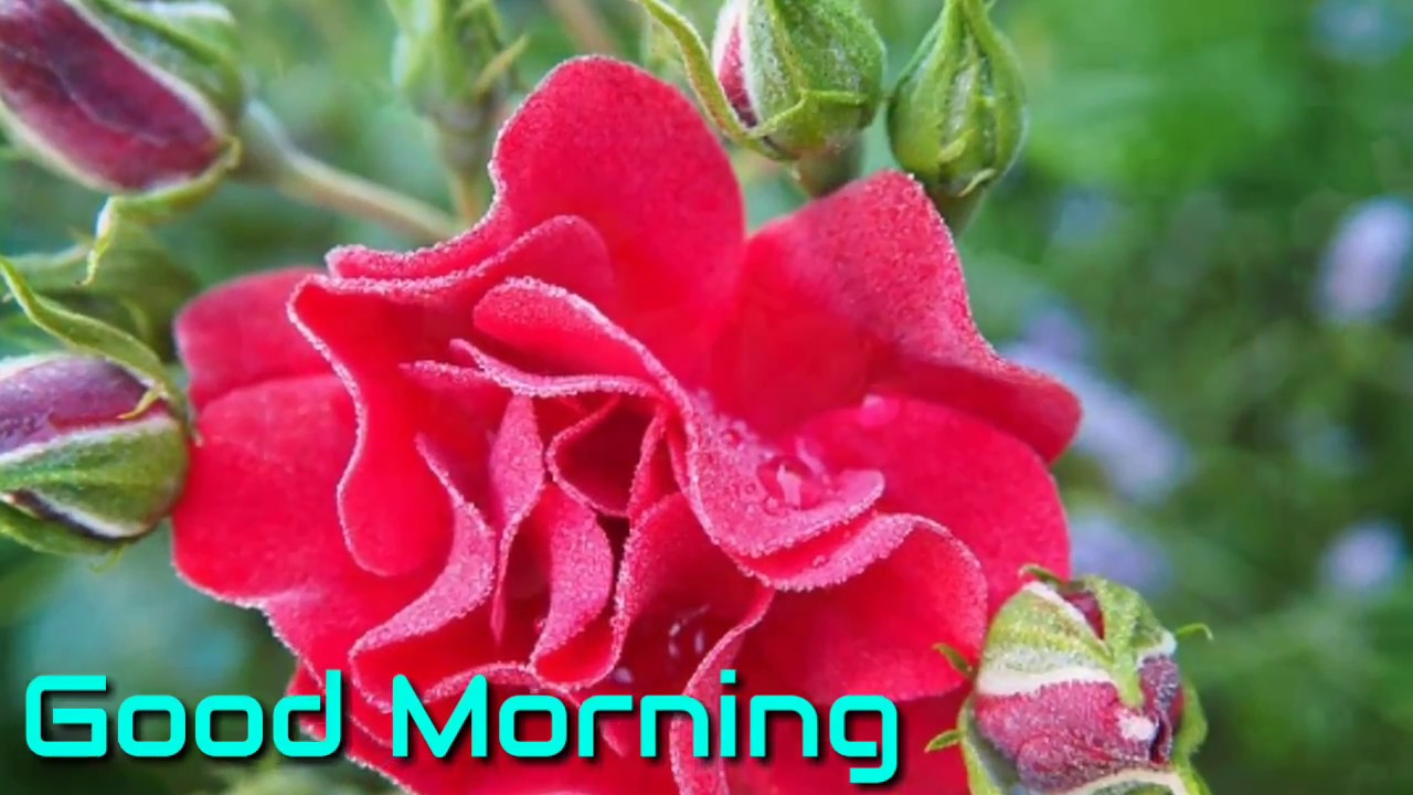 All good morning pictures download for whatsapp videos song