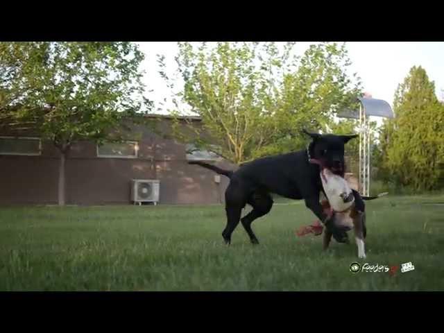 Barf διατροφή για σκύλους