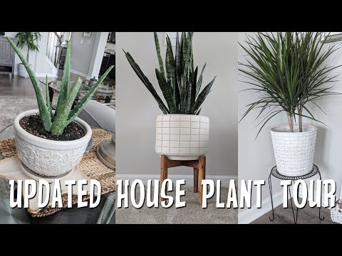 Updated House Plant Tour-Living Home Decor!