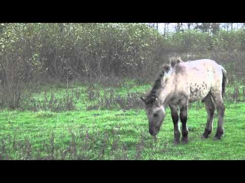 Social contact foals and (other) adults - the importance of being safe