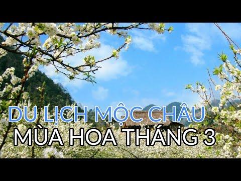 Đi đường ngắm cảnh đẹp đến xao lòng ở TT Mộc Châu cao nguyên xinh đẹp #hnp