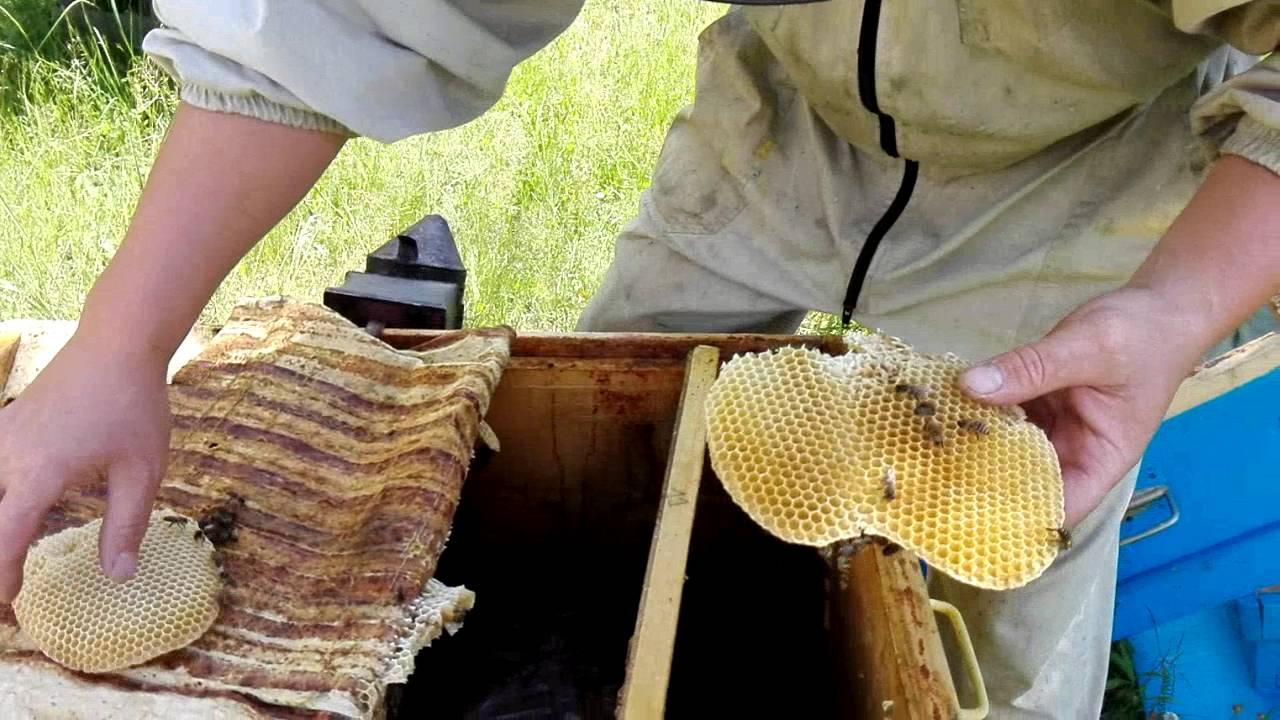Производство и продажа меда. Мёд без добавок от производителя с гарантией качества. Пасека находится в. Перга: цена 40 руб/кг. Перга хорошего.