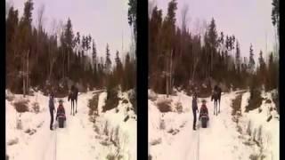 Придурки на снегоходах преследуют лося. Лось атакует снегоход(Лося преследуют двое мужчин на снегоходах. Лось убегает от них, но безумцы никак не отстаютот бедного живот..., 2014-04-24T16:08:51.000Z)