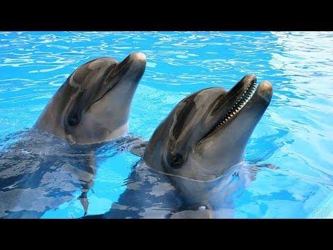 Дельфинарий  Dolphin Planet в Ярославле