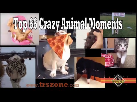 Top 66 Funny Animal Moments