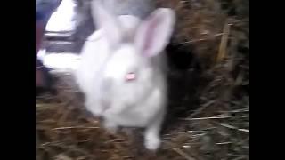 Кролики дают жару