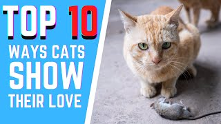 Cats 101 : How cats show their love to you
