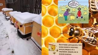 ПЛАЧУЩИЕ РАМКИ  (Crying frame in the apiary)