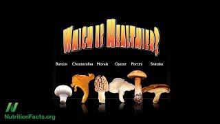 Nejzdravější houba