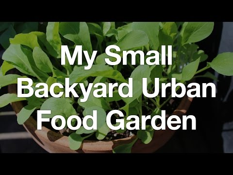Garden Tour: My small backyard urban food garden (July 2016)
