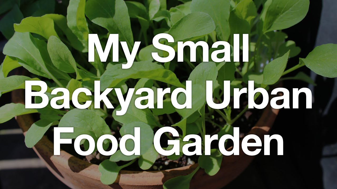 garden tour my small backyard urban food garden july 2016 youtube