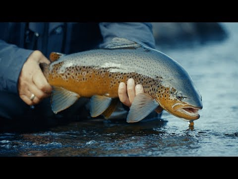 VIP TROUT PROGRAM Fly Fishing For Huge Brown Trout In Russian Tundra