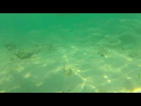 Go Pro Hero: Mullets of Hotel Marriott @ Grand Cayman Islands