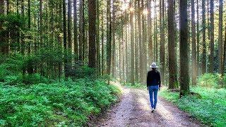 The Black Forest 3D (Doku über den Schwarzwald, Ganze Naturdoku, deutsch, Dokumentarfilm über Natur.