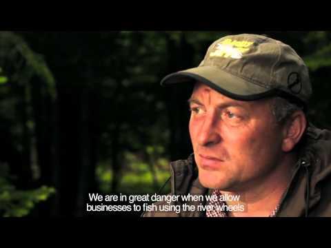 Sakhalin Death Roe