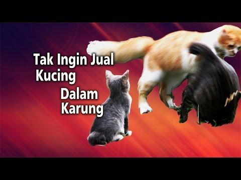 Tak Ingin Jual Kucing dalam Karung Mp3