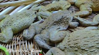 Frog Recipe - Fried Frog With Lotus Rhizome In River Eating Delicious