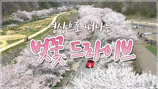 4K 랜선 꽃구경 #집에서함께해요 이것은 눈인가 벚꽃인…