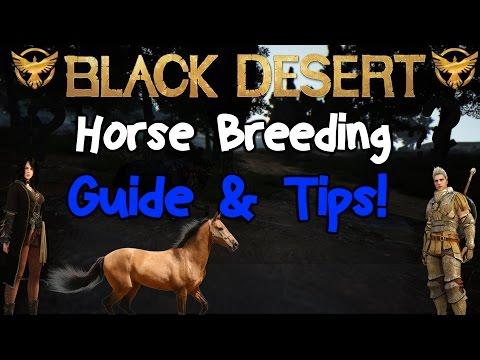 Black Desert Online: Horse Breeding Guide and tips!