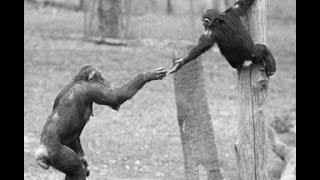 Моралното поведение при животните